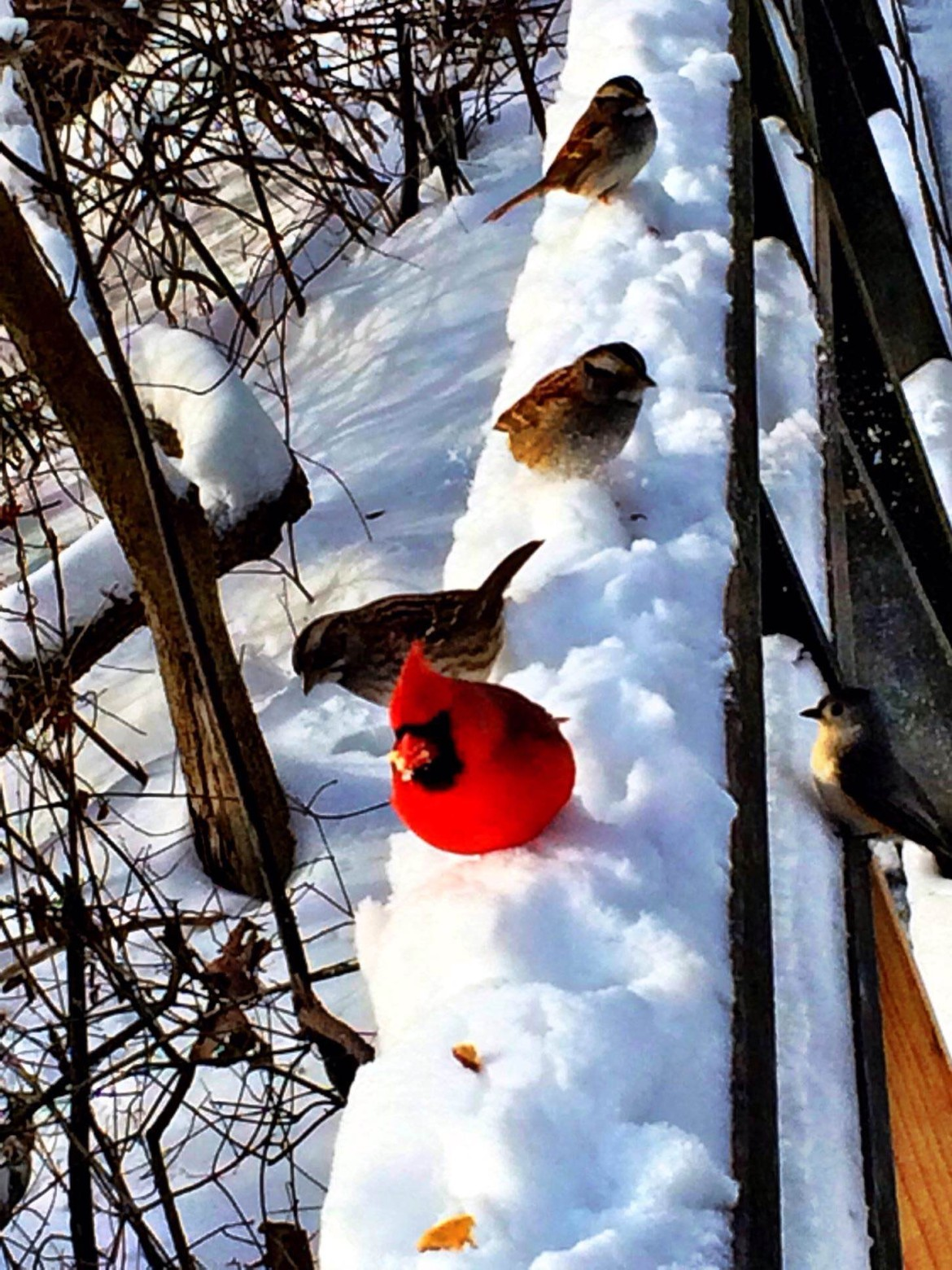 Birds in Van Cortlandt Park