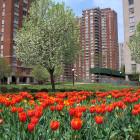 Co-op_City_spring