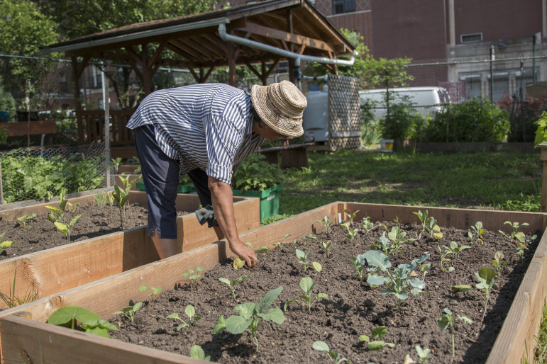 Ena McPherson working at Brooklyn's Tranquility Farm, which operates under a temporary license agreement on land owned by the New York City Department of Housing Preservation and Development (HPD). Now the city wants it back.