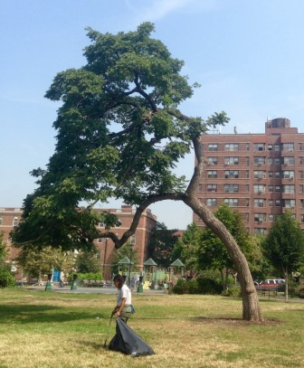 The poet himself might have had something to say about this tree in Joyce Kilmer Park.