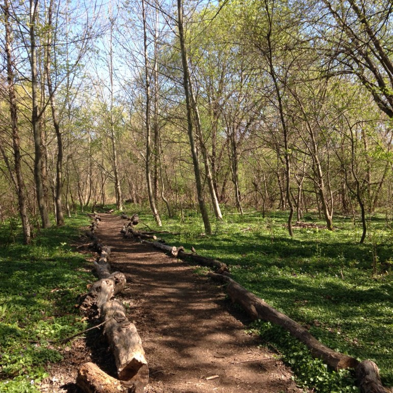 Inside the Bronx River Forest. This park, like many others across the city, faces the challenge of heavy use, which is why a better organized trail system plays such an important role.