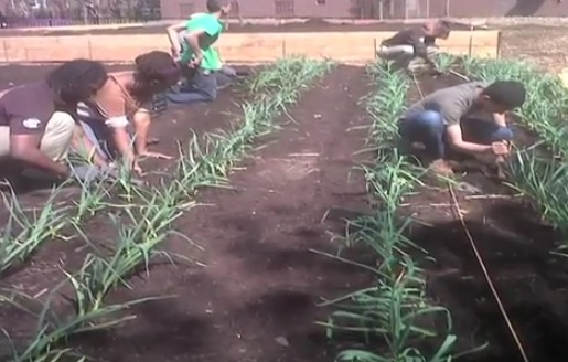 Volunteers rebuilt the farm on a new bed of soil, because the old one had been contaminated by Sandy's waters.