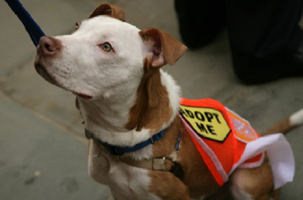 An adoptable pet who visited City Hall in 2010 for the announcement of a major grant to the Mayor's Alliance for NYC's Animals, a coalition of more than 160 animal rescue groups and shelters that work with Animal Care & Control of New York City.