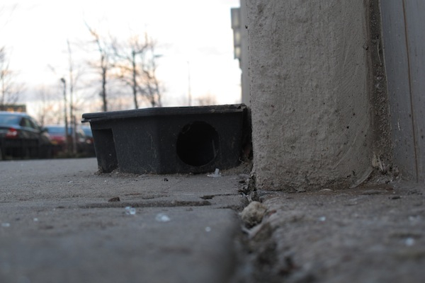 A final meal awaited rats in this bait station seen in early 2013 on Pacific Street not far from the Barclays Center.