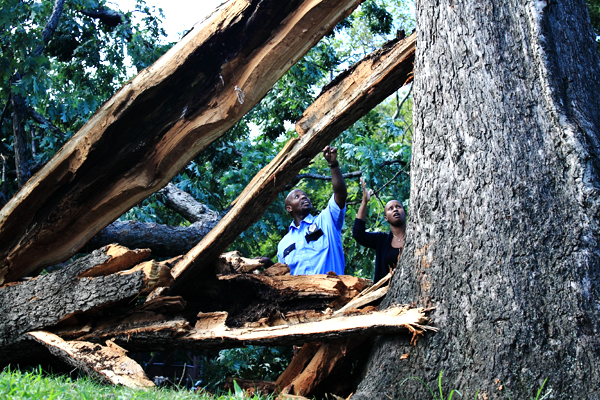 Damage from Hurricane Irene in the Bronx. Very few new trees were affected by the storm, but older trees suffered and caused damaged.